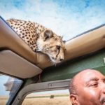 10 Interesting Facts About Cheetahs