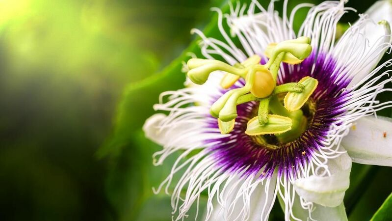 amazing flowers in the world