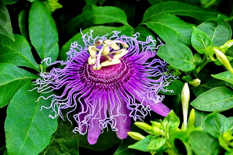 rare most beautiful flower in the world