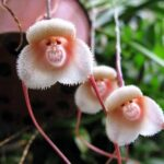 Top 10 Weirdest Flowers in the world